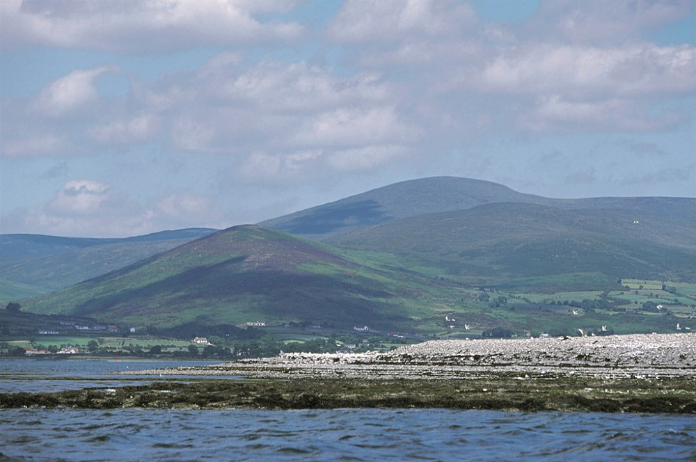 GreenIsland with Mourne mountains in the background RSPB images AndyHay